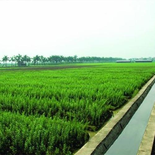 战略合作绿色农业基地